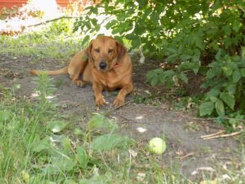 Lindy enjoying the shade
